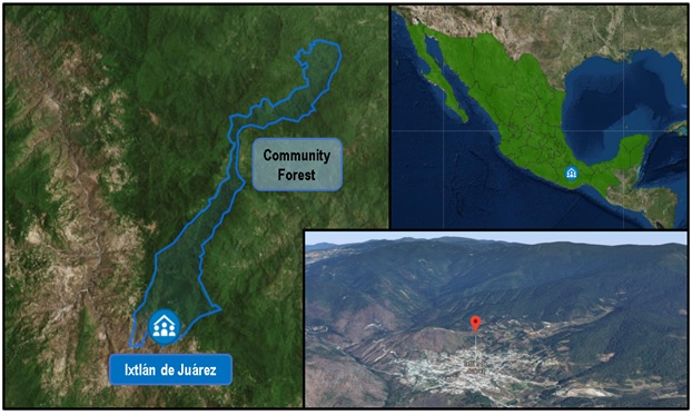 Community forest in Oaxaca