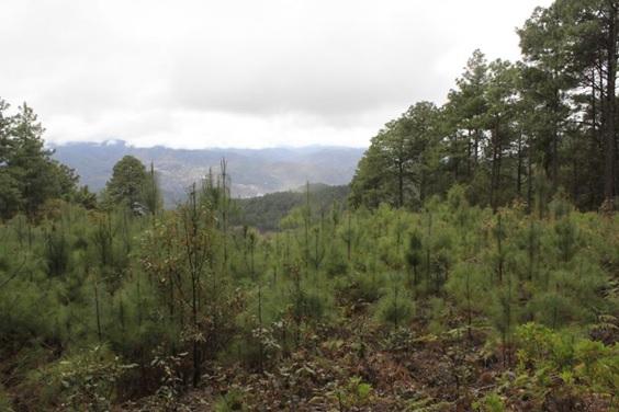 Ixtlan de Juarez forest