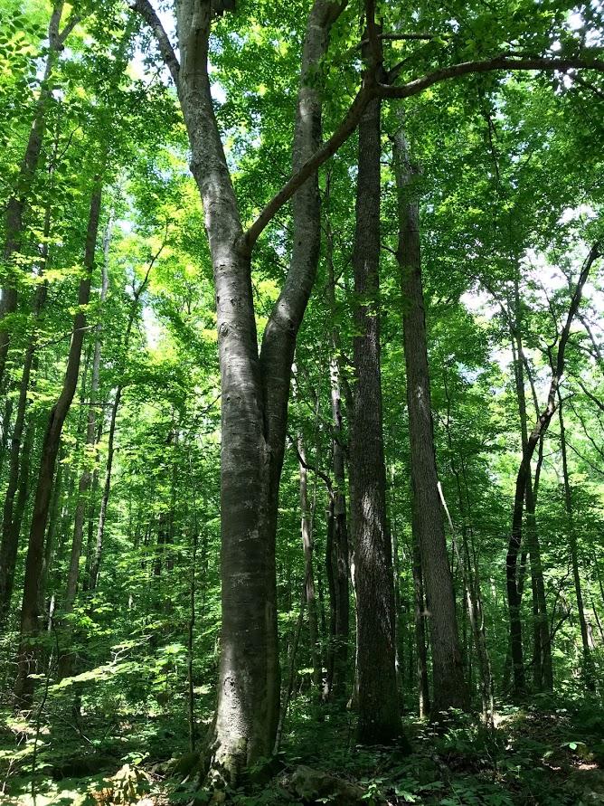Tuuk forest