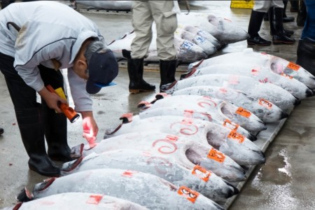 Tuna auction in China
